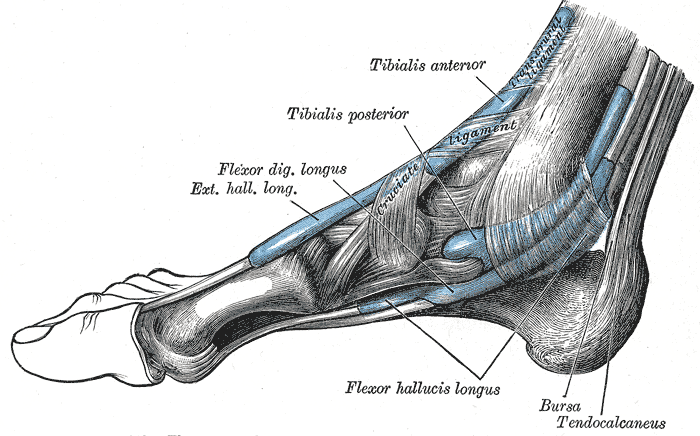 Enthesitis and Achilles Tendon